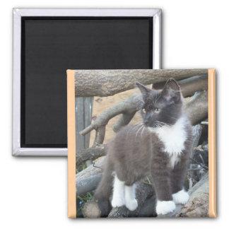 Tuxedo Kitten Refrigerator Magnets