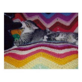 Tuxedo Kitten Waking Up Tabby Kitten Postcard