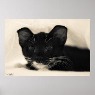 Tuxedo Kitty Cuteness Poster