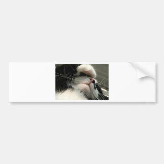 Tuxedo Kitty Has A Sick Headache Bumper Sticker