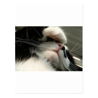 Tuxedo Kitty Has A Sick Headache Postcard