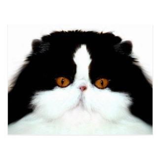 Tuxedo persian cat face postcard