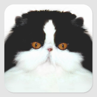 Tuxedo persian cat face square sticker