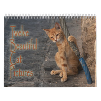 Twelve Beautiful Cats Pictures Calendar