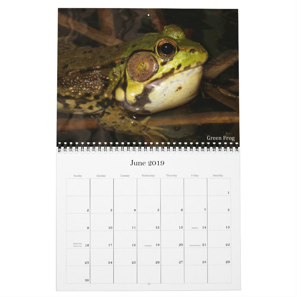 2019 Frog Photo Calendar for sale; green frog photo