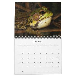 2019 Frog Photo Calendar for sale; green frog photo