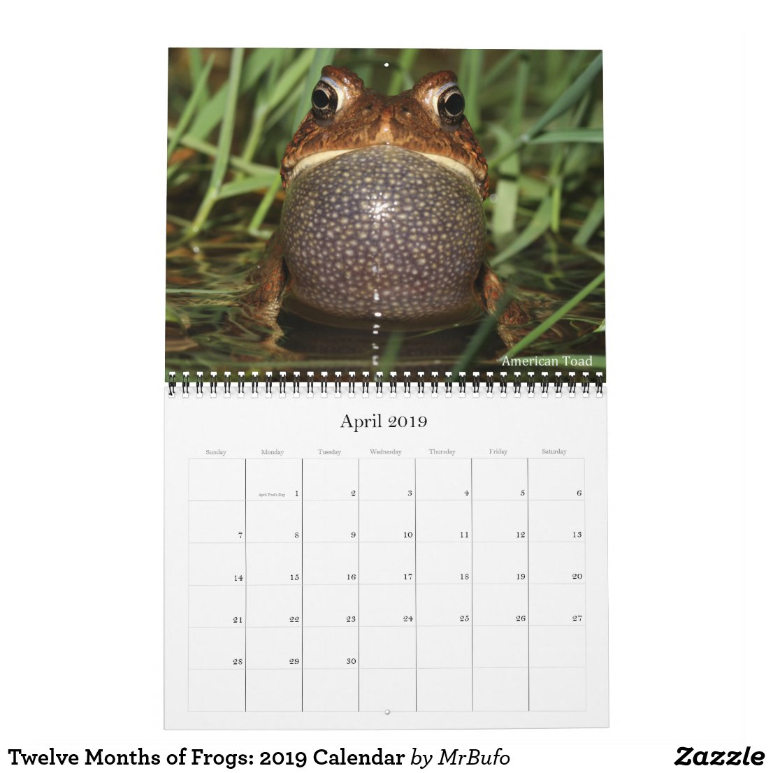 2019 Frog Photo Calendar for sale; American Toad Photo