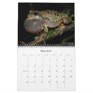 2019 Frog Photo Calendar for sale; Gray Treefrog Photo