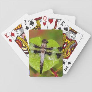 Twelve-spotted Skimmer Deck Of Cards