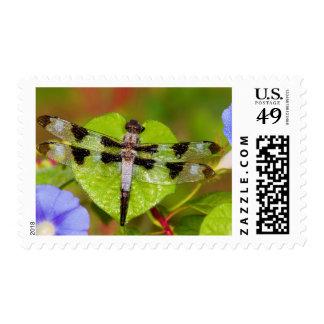 Twelve-spotted Skimmer Postage Stamps
