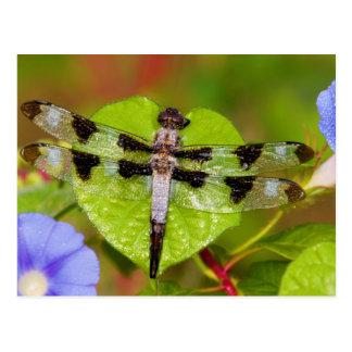 Twelve-spotted Skimmer Postcard