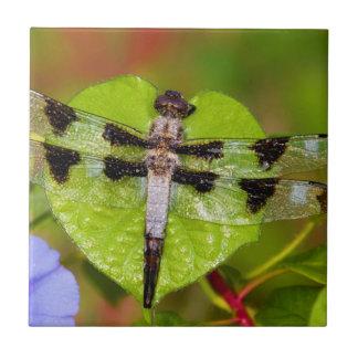 Twelve-spotted Skimmer Tile