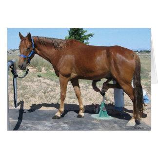 TWH Horse Farrier Hoof Care - Blank Inside Greeting Card