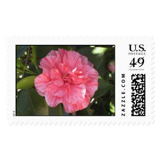 Twice Pink Camelia Stamp