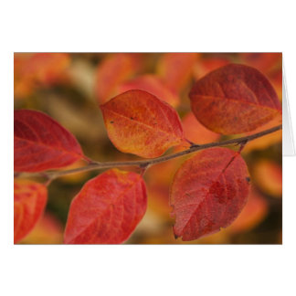 Twig covered with autumn leaves card