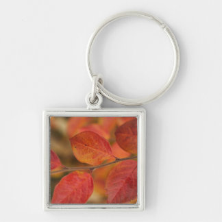 Twig covered with autumn leaves keychain