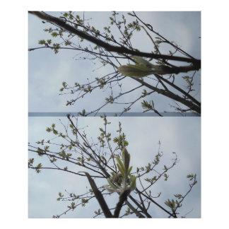 Twig in light green photo print