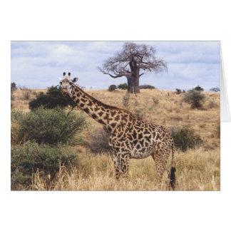 Twiga Masai (Masai Giraffe) Card