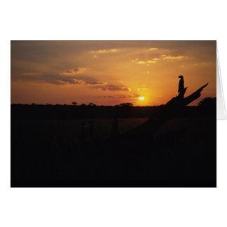 Twilight meerkats - KMP Card Series 1