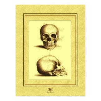 Twin Antique Skulls Postcard