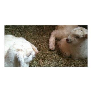 "Twin Baby Goats 8""x4"" Photo Card"