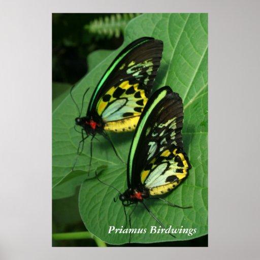 Twin Butterflies Poster