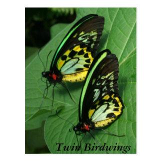Twin Butterfly Postcard