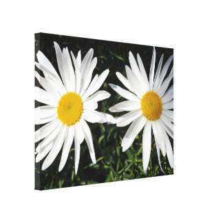 Twin Daisies Gallery Wrapped Canvas