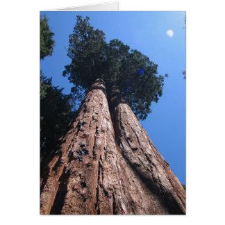 Twin Giant Sequoias, Sequoia National Park Card
