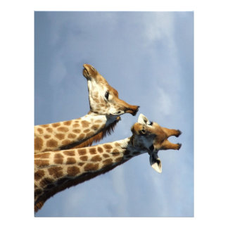 Twin Giraffes Letterhead