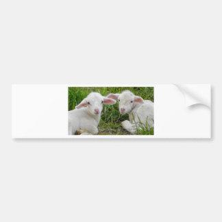Twin Lamb Baby Animal Thinking Of You Bumper Sticker