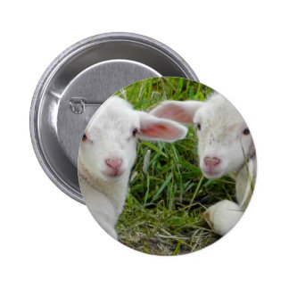 Twin Lamb Baby Animal Thinking Of You Buttons