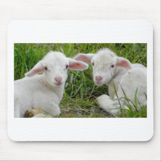 Twin Lamb Baby Animal Thinking Of You Mouse Pad