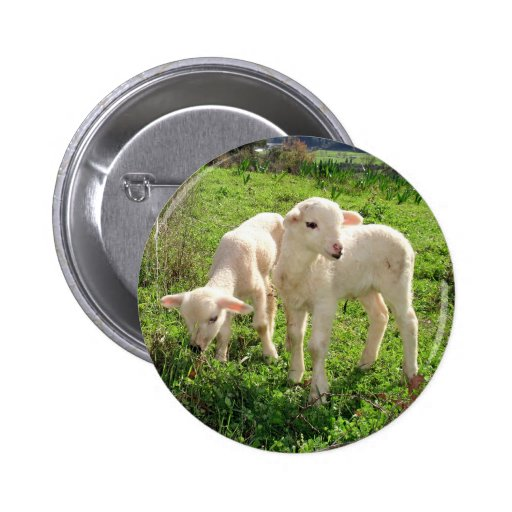 Twin Lambs Grazing 2 Inch Round Button