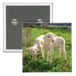 Twin Lambs Grazing 2 Inch Square Button