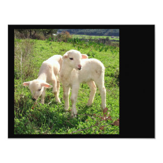 Twin Lambs Grazing Card