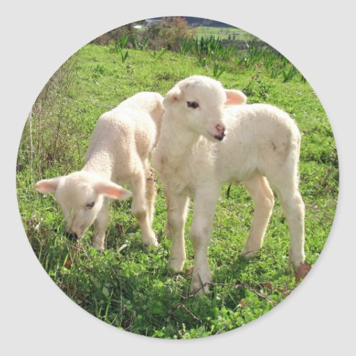 Twin Lambs Grazing Stickers