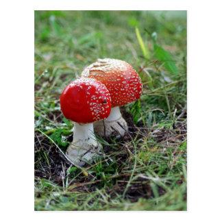 Twin Magic Mushrooms Postcard