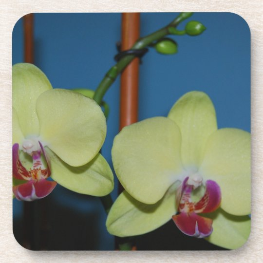 Twin Orchids Coaster