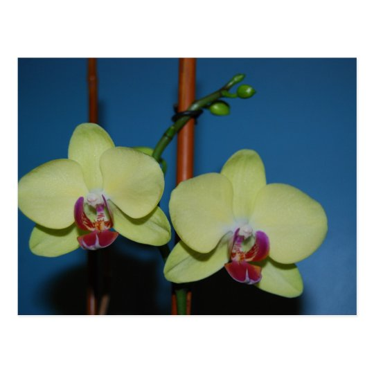 Twin Orchids Postcard