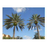 Twin Palm Trees Postcard