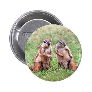Twin squirrels 2 inch round button