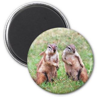 Twin squirrels 2 inch round magnet