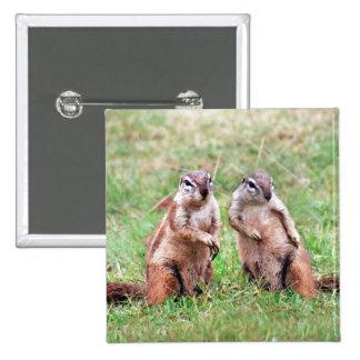 Twin squirrels 2 inch square button
