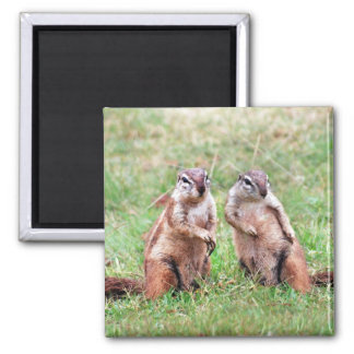 Twin squirrels 2 inch square magnet