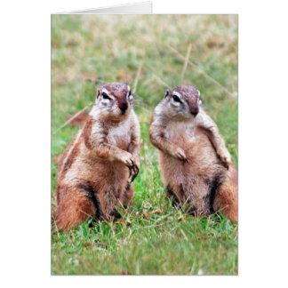 Twin squirrels greeting card