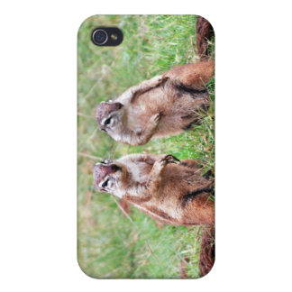 Twin squirrels iPhone 4 cases