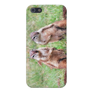 Twin squirrels iPhone 5 cases