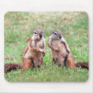 Twin squirrels mouse pad