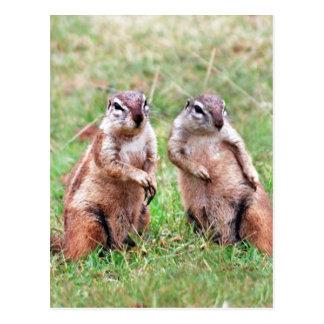 Twin squirrels postcard